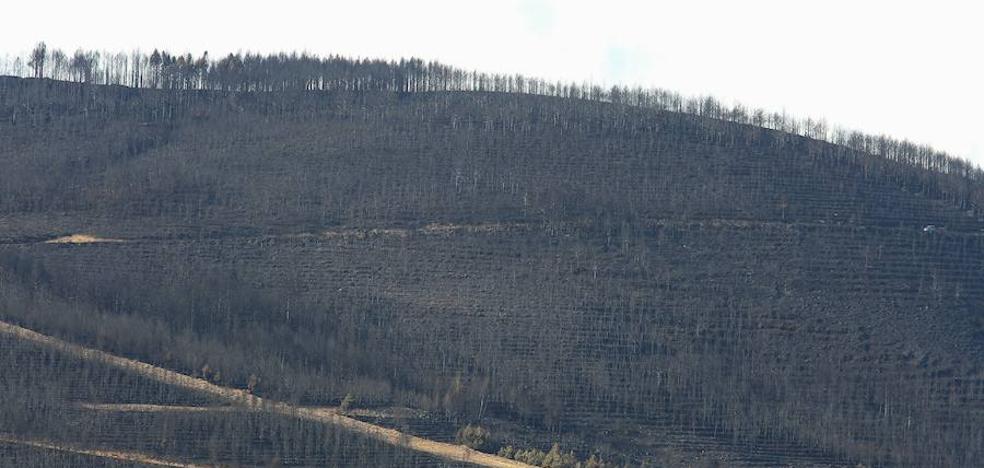 El fuego arrasa en el Bierzo desde el año 2000 más de 68.000 hectáreas con 15 grandes incendios