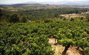 La diversidad biológica «excelente» del viñedo de Bodegas Gancedo
