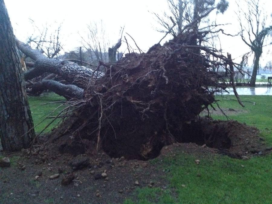 Caída de un árbol en el parque del Plantío