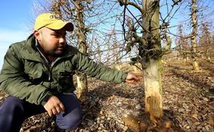 Diputación inicia en Toral de los Vados el desbroce de cunetas para luchar contra la plaga de conejos en el Bierzo