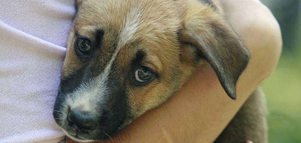 Más de 104.000 perros y 33.300 gatos, abandonados en 2016