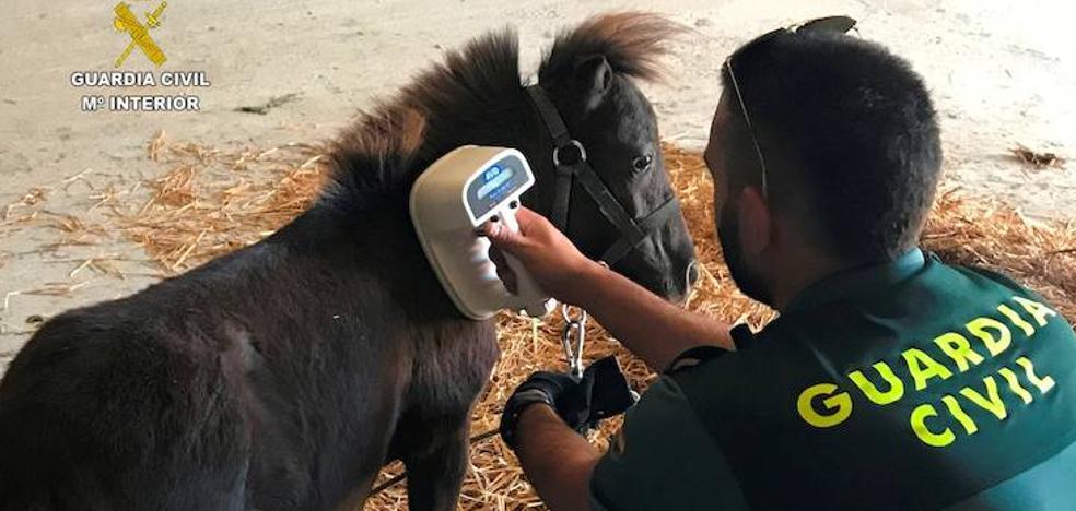 La Guardia Civil investiga a una persona por el robo de un pony