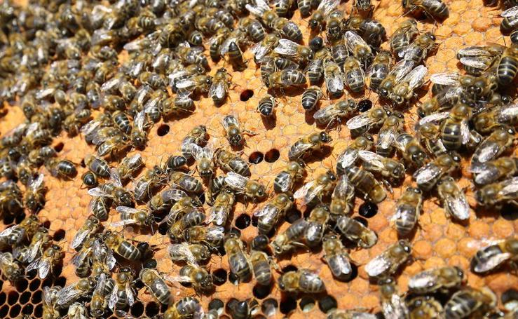 El sabor de una miel de Paraje Patrimonio de la Humanidad