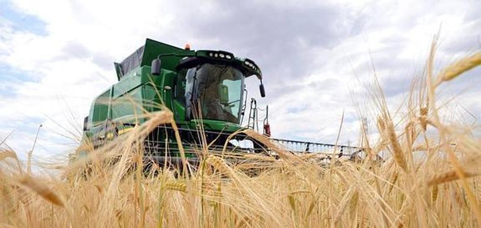 Agroseguro indemniza con casi 160 millones a los cultivos de cereal de Castilla y León por la sequía y las heladas de primavera