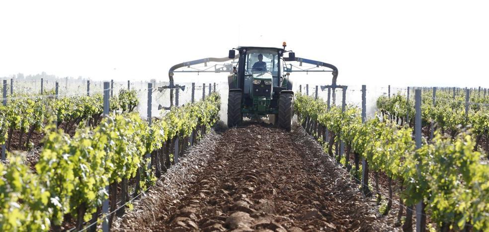 Itacyl convierte el viñedo en campo experimental del aprovechamiento energético de los residuos de la poda