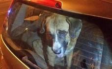 Denunciado en Ponferrada por dejar a tres perros encerrados en el coche a altas temperaturas