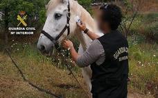 Cincuenta personas investigadas por maltrato animal en Málaga
