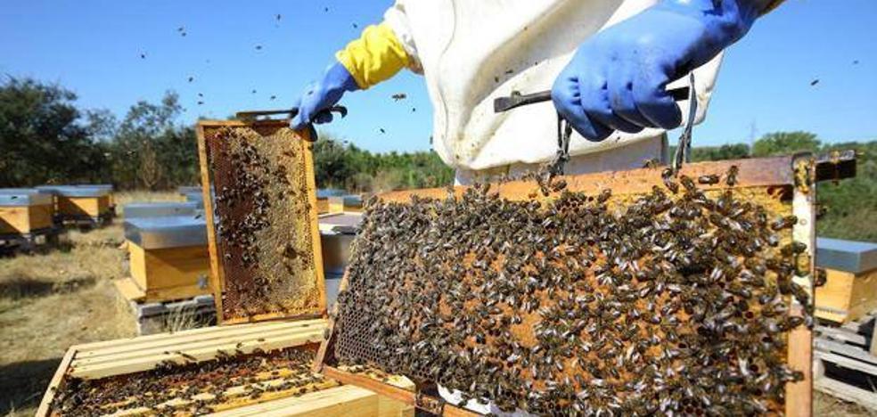Asaja y los apicultores unen sinergias tras un año «catastrófico» con pérdidas del 90% para el sector