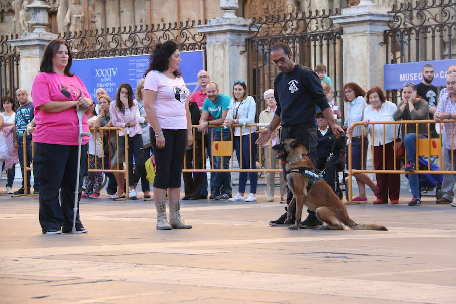 Exhibición canina a los pies de la Catedral