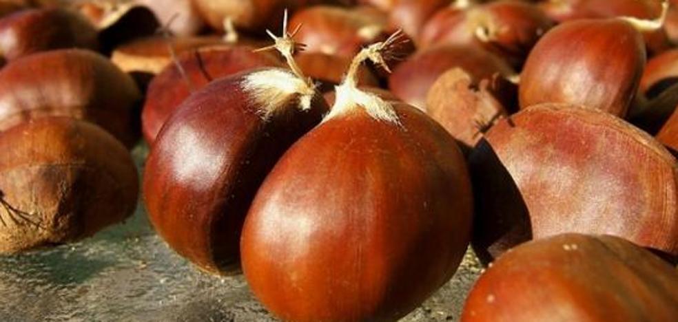 Asaja asegura que la cosecha de castañas será la peor de los últimos años con pérdidas de 9 millones y medio de euros