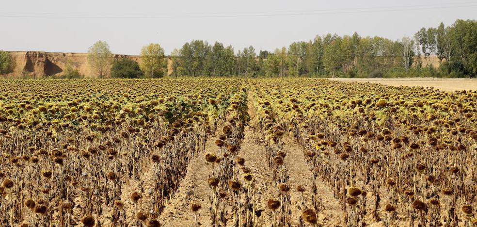 Fomento y Agricultura recuperan el pulso inversor en los presupuestos de Castilla y León de 2018