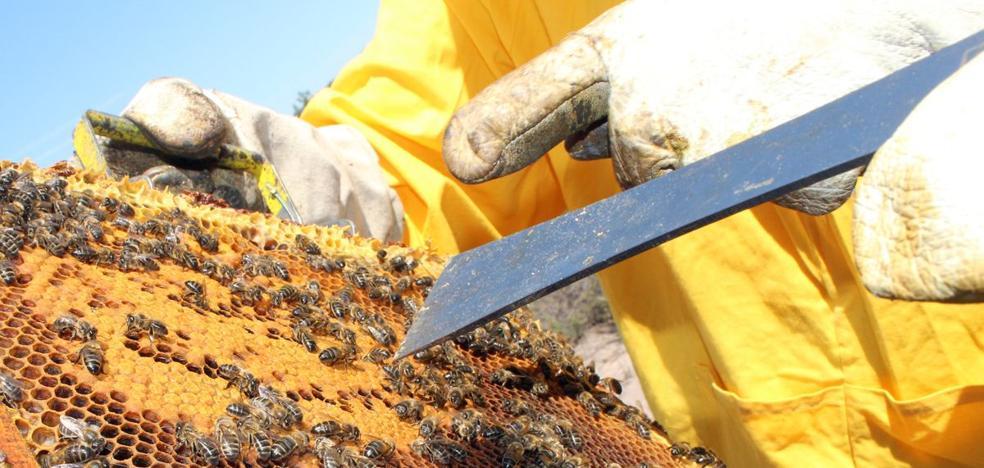 Un apicultor denuncia el robo de 34 de sus colmenas en Bembibre