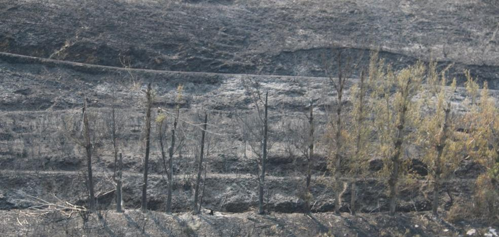 El Gobierno destina un millón de euros para la restauración de las zonas calcinadas por el incendio de La Cabrera