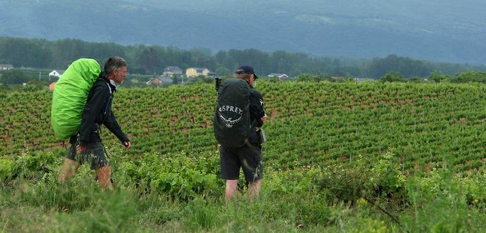 La campaña de recuperación de viñedo del Banco de Tierras y la DO evitan el abandono de más de cien hectáreas desde 2013