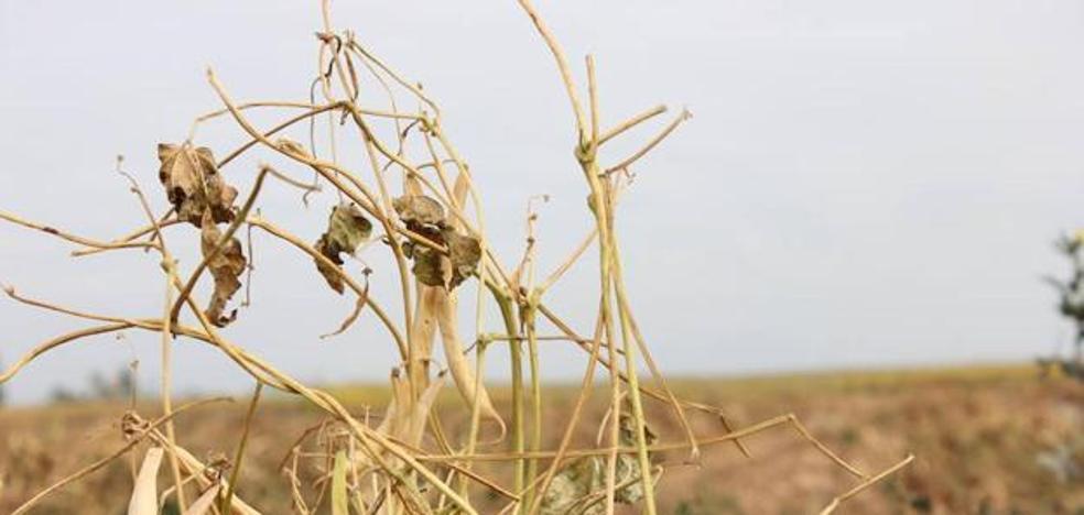 Marcos garantiza que Castilla y León será de nuevo la primera autonomía en actuar si la situación de sequía persiste en el tiempo