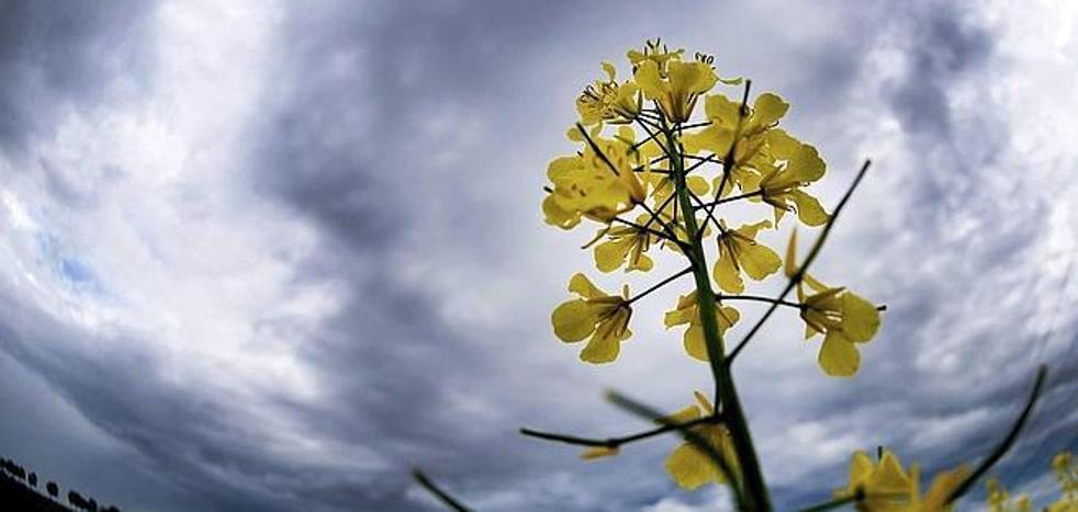 Asaja reclama «cambios» en los seguros para ampliar la protección por «no nascencia» de los cultivos
