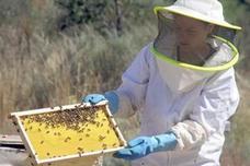 UCCL pide aumentar el presupuesto para los programas apícolas en un 47,8%
