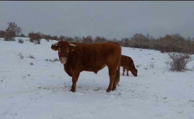Las fotos de la nieve en Castilla y León enviadas por nuestros lectores