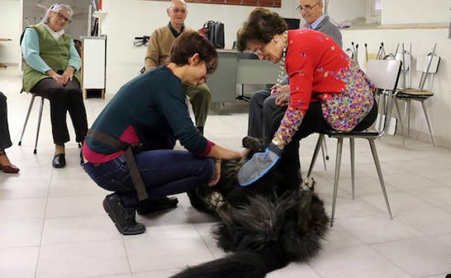 León implanta la terapia con perros en la residencia Virgen del Camino y el centro de menores Gloria Fuertes