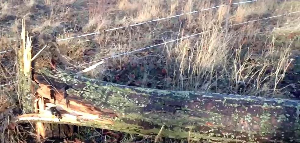 León registra 67 incidentes por la virulencia de la tormenta 'Ana'