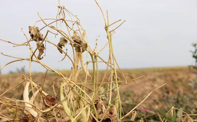 El año 2017 hunde al sector agrario y ganadero de León y le deja sin reservas para afrontar el próximo año