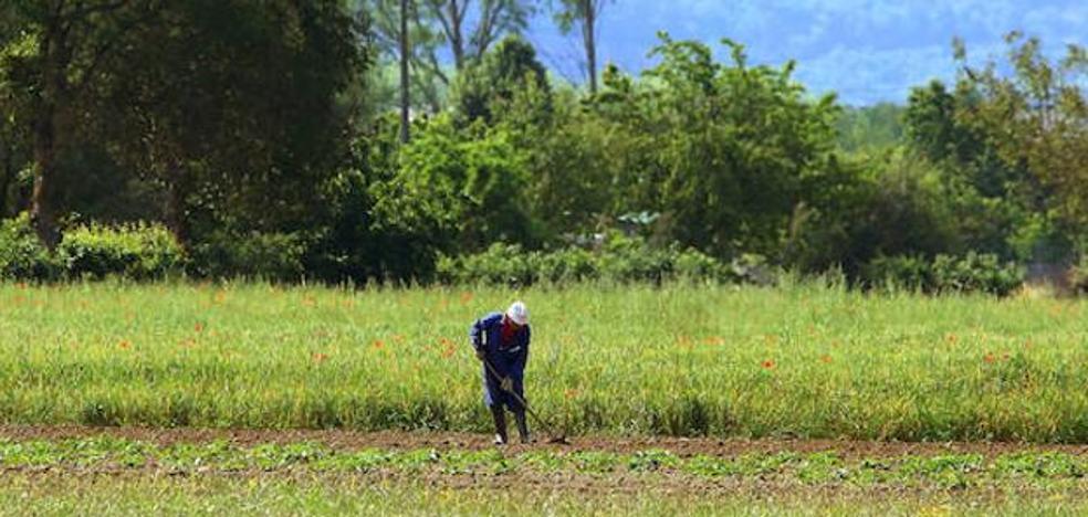 UCCL solicita la ampliación del plazo para la contratación del seguro de herbáceos