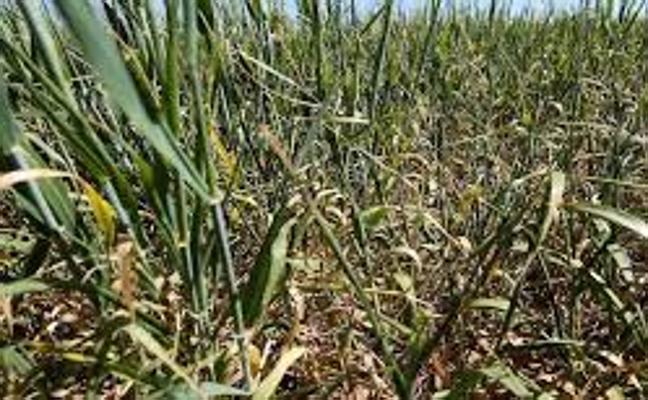 Enesa amplía el plazo para la contratación del seguro de herbáceos hasta el 22 de diciembre