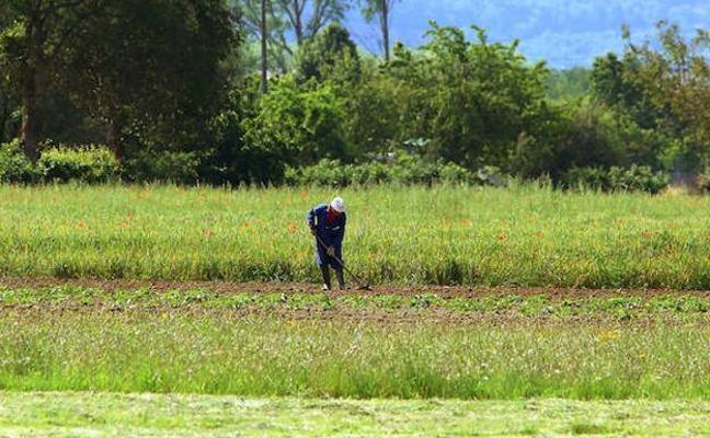 Los agricultores mayores de 65 años cobran cuatro millones más de PAC que los menores de 40
