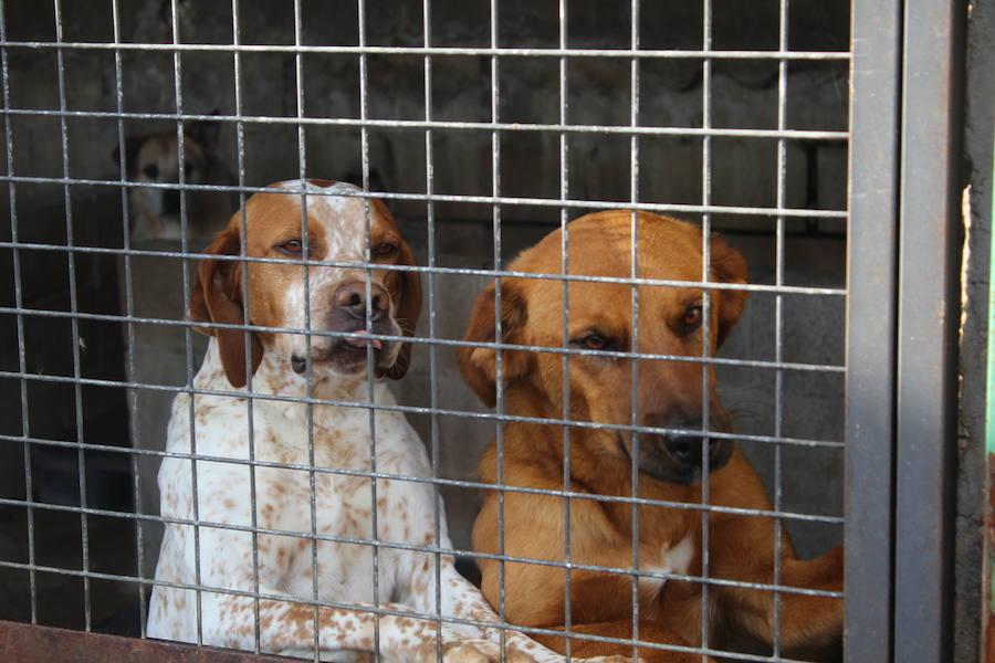 Mejoras en la Protectora de Animales