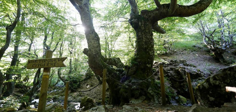 UPL exige a la Junta que inicie los trámites para señalar las Reservas de la Biosfera y Parques Naturales