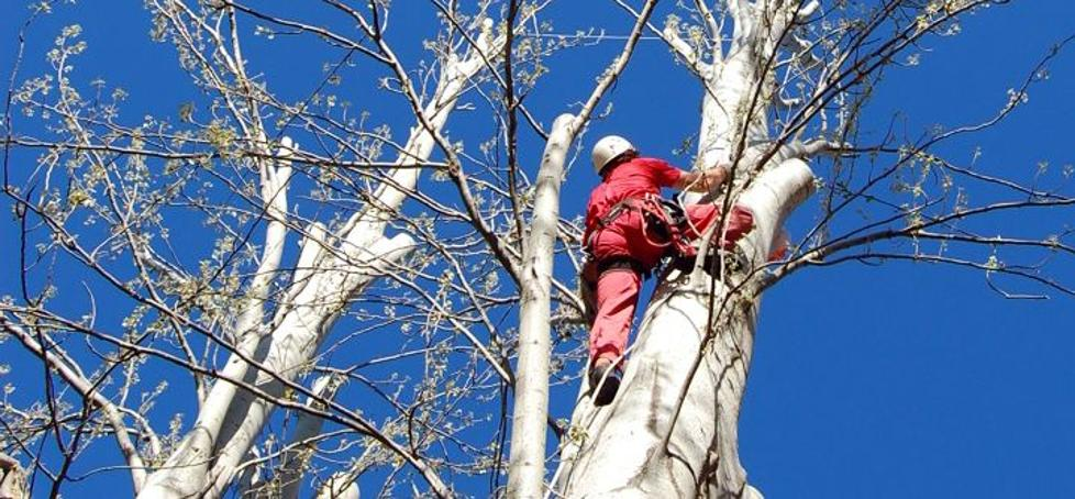 UGT exige más control de la seguridad laboral en el sector forestal tras la muerte de un trabajador en León