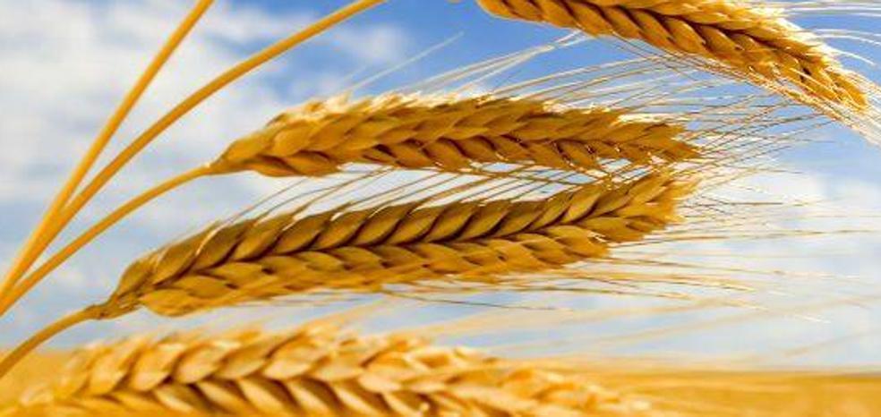 Fgulem programa una jornada de transferencia de conocimiento en el sector agroalimentario