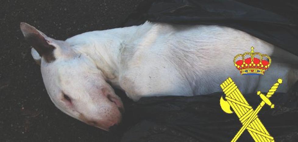Investigan a un ovetense por el robo y muerte de un perro de una finca de Ribaseca