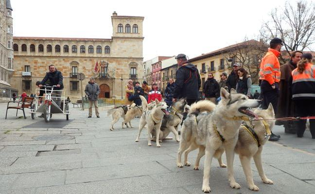 La Protectora de León pide que se evite el uso de pirotecnia durante la celebración de San Antón
