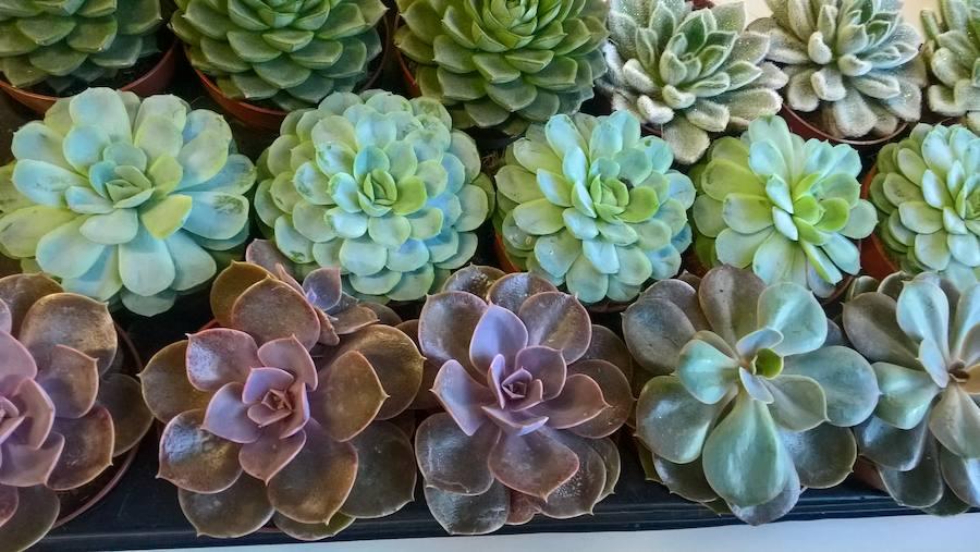 Taller de decoración con plantas crasas en la ULE