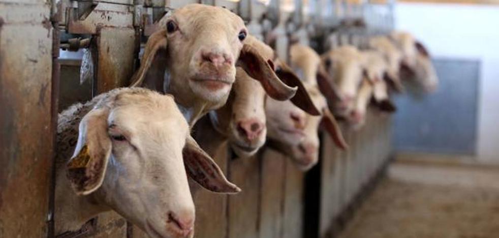 La Junta anticipa 86 millones en ayudas de la PAC a 8.584 agricultores y ganaderos leoneses