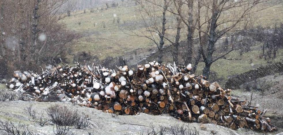 La restauración de La Cabrera tras los devastadores incendios supondrá una inversión de tres millones de euros