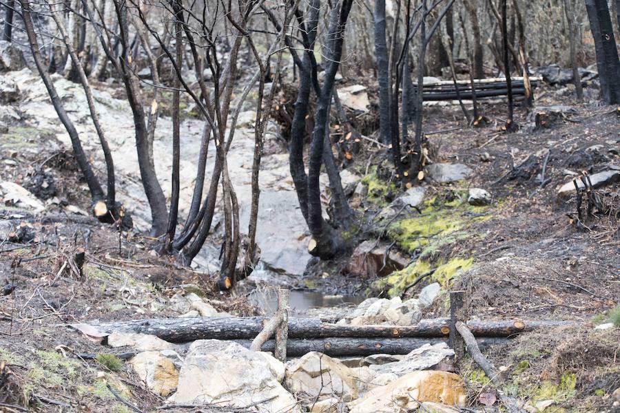 Actuaciones realizadas tras el fuego en La Cabrera