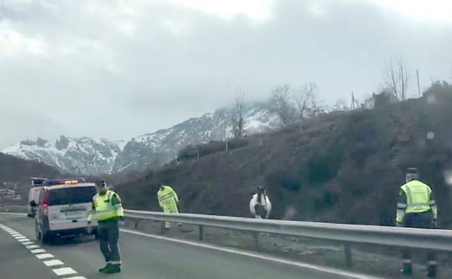 La presencia de un caballo en la autopista del Huerna obliga a cortar el tráfico