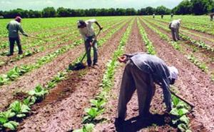 UGT FICA considera insuficiente el proyecto de Ley de Ayudas a la Agricultura por la Sequía