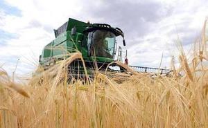 Las malas previsiones de agua fomentan el aumento del cultivo de cereal en León en 7.000 hectáreas