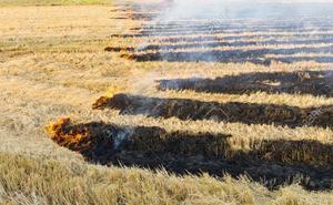 El TSJCyL anula quema rastrojos de cereales por carecer que de justificación