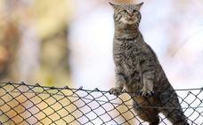 Condenada a prisión una pareja que envenenó a ocho gatos de su vecina