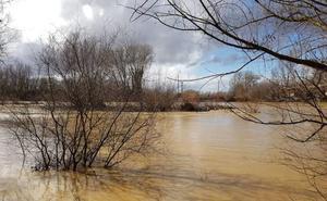 El Esla amenaza con inundaciones a su paso por Valencia de Don Juan
