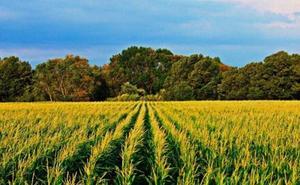 Bayer reúne en León a expertos en el cultivo de maíz en el II Foro de Maíz