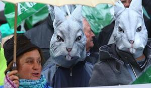 Los agricultores exigen indemnizaciones por los daños de la plaga de conejos que «arruina» las plantaciones del Bierzo