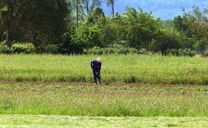Cambio de tendencia: Castilla y León pierde más de 1.600 agricultores autónomos y gana 2.600 asalariados en cinco años