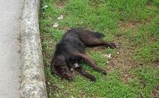 Mueren envenenados en Cistierna al menos tres perros y más de ocho gatos