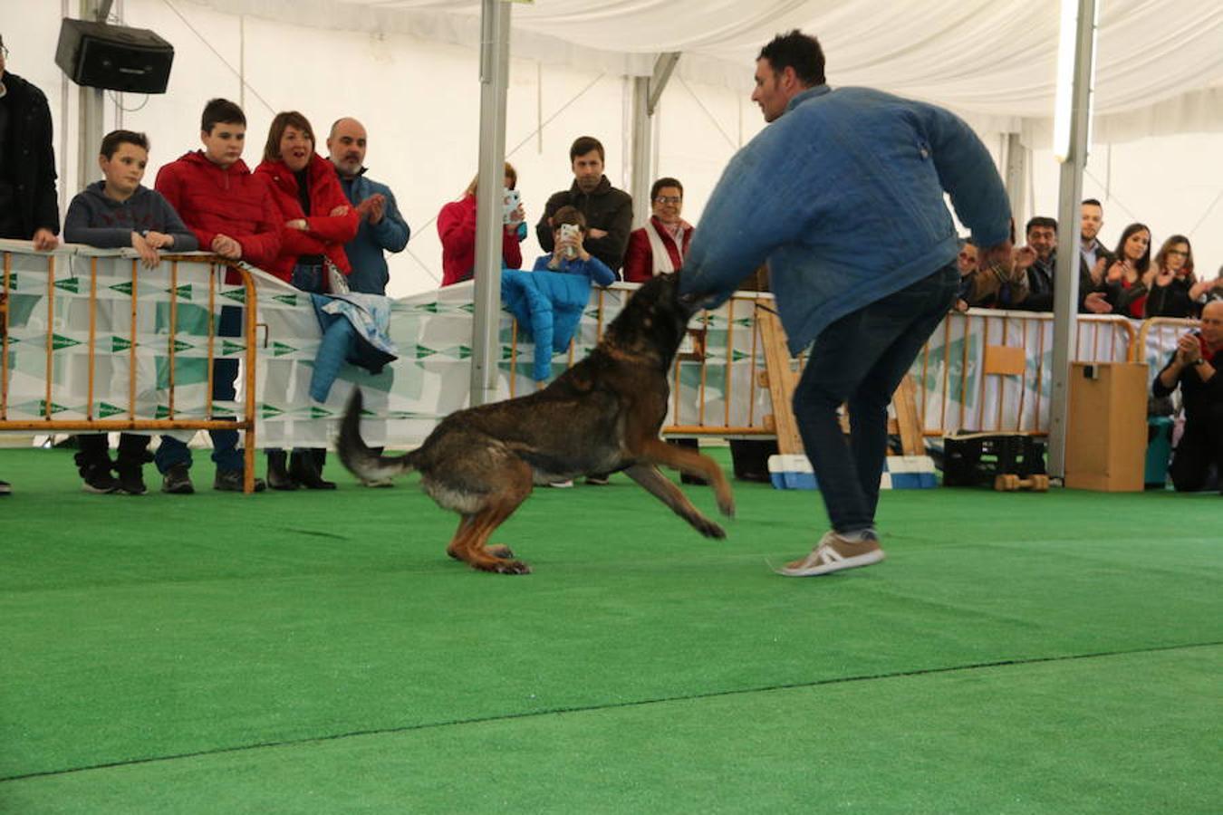 Exhibición de perros en El Corte Inglés