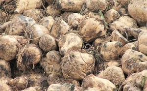 Ciudadanos pregunta por el posible trasvase de 60.000 toneladas de remolacha desde La Bañeza a Olmedo